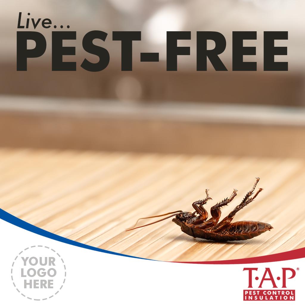 Social Media - Live Pest Free v1