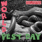 World Pest Day - The Clash - June 6