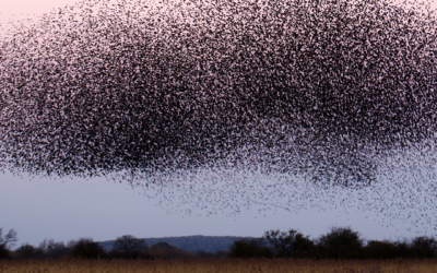 A Swarm of Insects